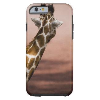 Close-up of Somali giraffe (Giraffa Tough iPhone 6 Case