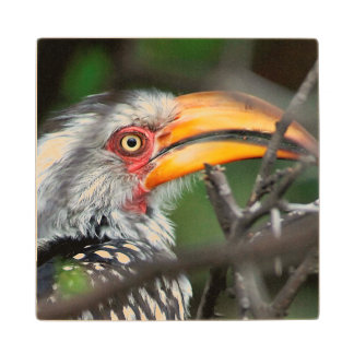 Close-Up Of Southern Yellow-Billed Hornbill Wood Coaster