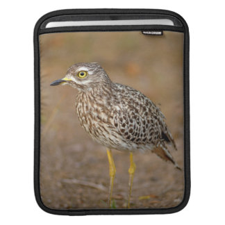 Close-Up Of Spotted Thick-Knee iPad Sleeve