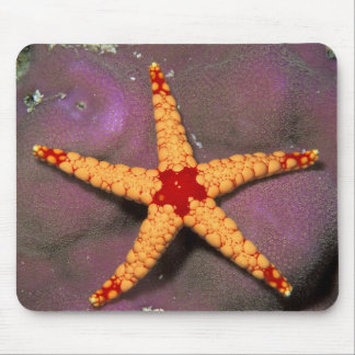 Close up of starfish, or fromia monilis. mouse mat