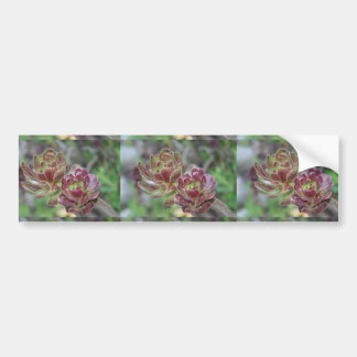 Close Up Of Succulent With Garden Background Bumper Sticker