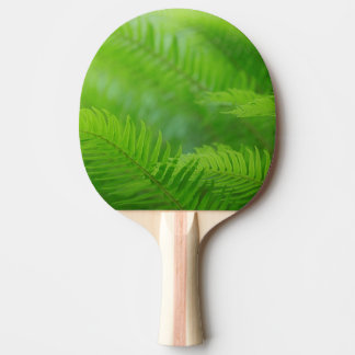 Close-up of sword fern ping pong paddle