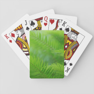 Close-up of sword fern playing cards