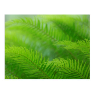 Close-up of sword fern postcard