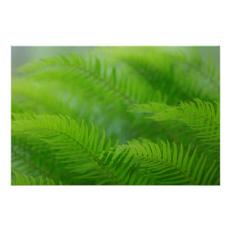 Close-up of sword fern poster