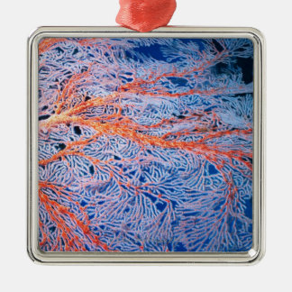 Close up of the coral, Okinawa, Japan Christmas Ornament