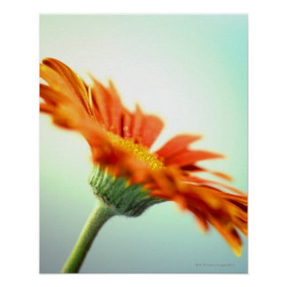 close-up of the petals of an orange gerbera poster