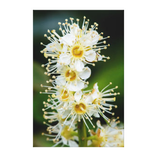 Close-up of tiny flowers stretched canvas print
