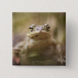 Close-up of toad 15 cm square badge