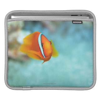 Close-up of tomato anemone fish, Okinawa, Japan iPad Sleeve