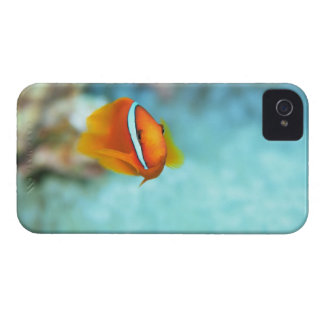 Close-up of tomato anemone fish, Okinawa, Japan iPhone 4 Case