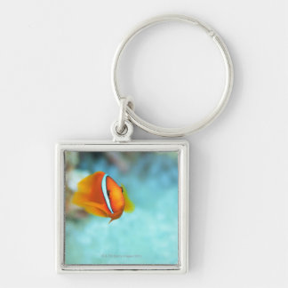 Close-up of tomato anemone fish, Okinawa, Japan Silver-Colored Square Key Ring