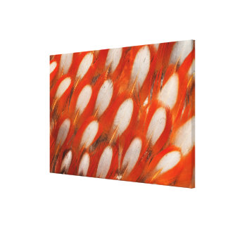 Close Up Of Tragopan Feathers Canvas Print