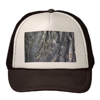 Close-up of tree trunk's grey bark trucker hat