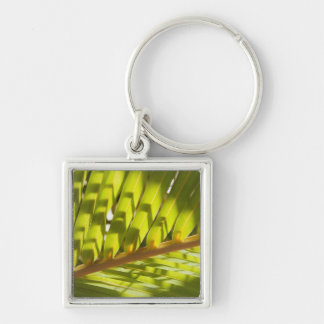 Close up of tropical palm frond key ring