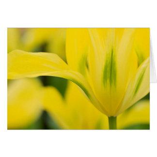 Close-up of tulip 2 card