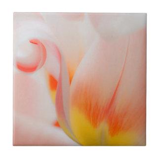 Close-up of tulip 3 tile