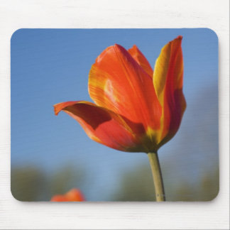 Close-up of tulip flowers mouse mat