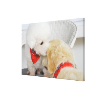Close-up of two dogs canvas print