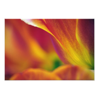 Close-up of underside of tulip flower, 4 photo print