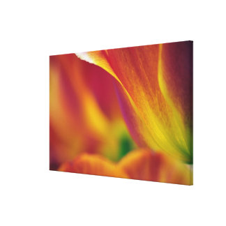 Close-up of underside of tulip flower, canvas print