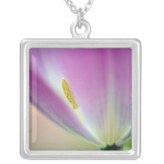 Close-up of underside of tulip flower, Kuekenhof 3 Silver Plated Necklace