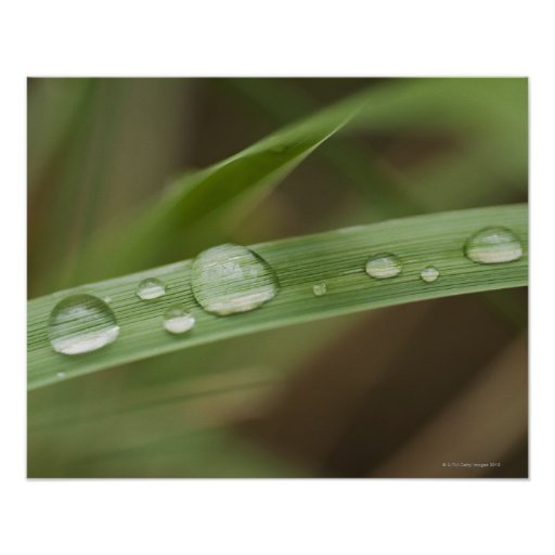 Close up of wet tropical leaf 4 poster