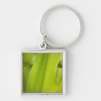 Close up of wet tropical leaf key ring