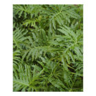Close up of wet tropical leaves poster