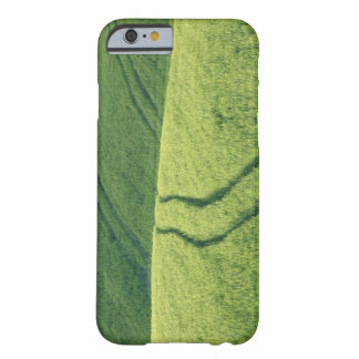 Close up of Wheat Field with Tire Tracks, Barely There iPhone 6 Case