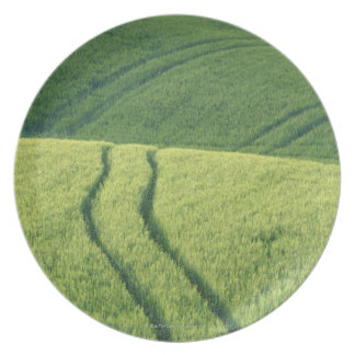 Close up of Wheat Field with Tire Tracks, Plate