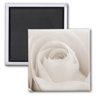 Close up of White Rose Petals Magnet
