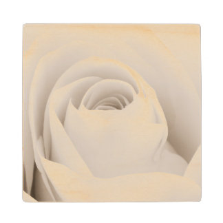 Close up of White Rose Petals Wood Coaster