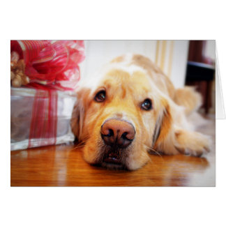 Close-up of wistful Golden Retriever dog Card