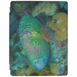 Close-up of Wrasse Fish iPad Cover