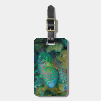 Close-up of Wrasse Fish Luggage Tag