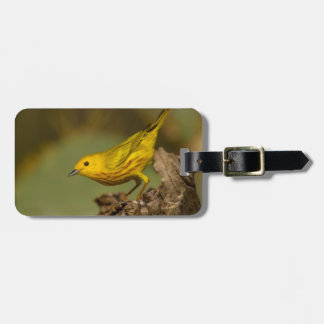 Close-Up Of Yellow Warbler Luggage Tag