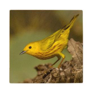 Close-Up Of Yellow Warbler Wood Coaster