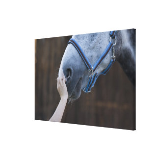 close-up of young girl touching white horse canvas print