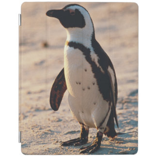 Close-up of young penguin iPad cover