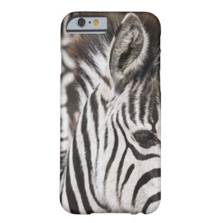 Close up of zebra barely there iPhone 6 case