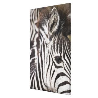 Close up of zebra canvas print