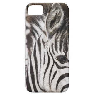 Close up of zebra case for the iPhone 5