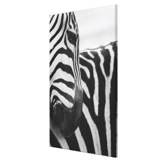 Close-up of zebra face and shoulder canvas print