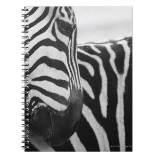 Close-up of zebra face and shoulder notebooks