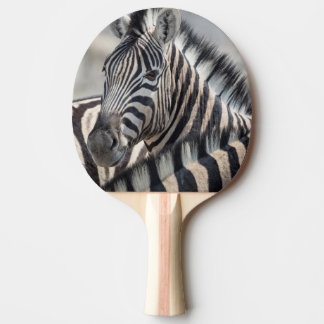 Close-up of zebra head between two other zebras ping pong paddle