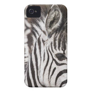 Close up of zebra iPhone 4 cover