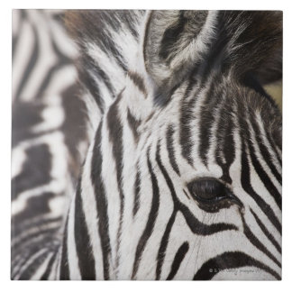 Close up of zebra tile