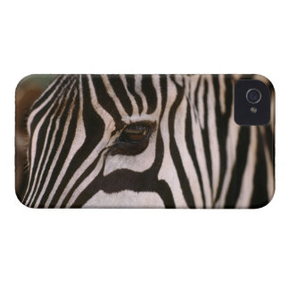 Close-up of zebra's head iPhone 4 covers