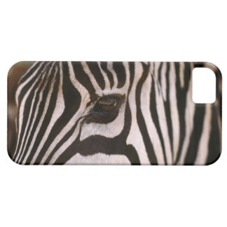 Close-up of zebra's head iPhone 5 covers